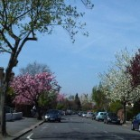 The 'Greening' of TurneyRoad